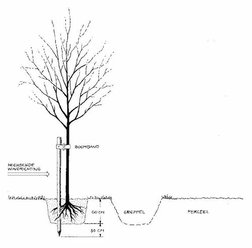 boom aanplant