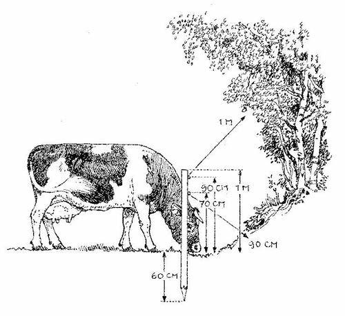 welke twee functies heeft hout in een boom